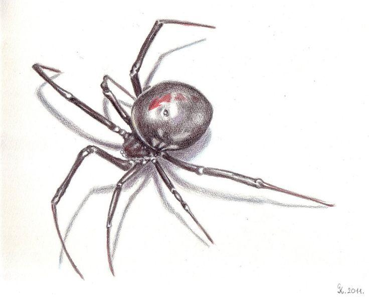 Drawn spider little black Widow The Pinterest black Best