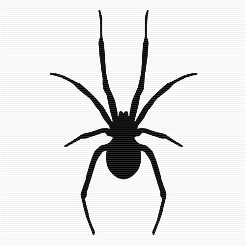 Drawn spider little black Spider Black on Widow Best