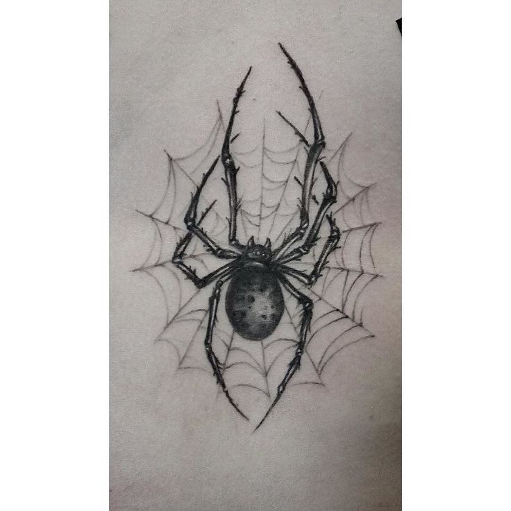 Drawn spider little black Tattoo spider web Spider Best
