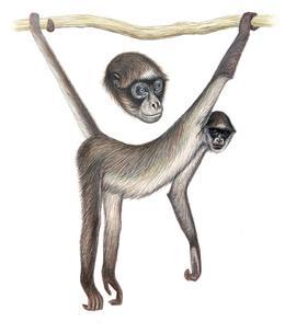 Drawn spider money Is monkey Venezuela  current