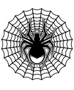 Drawn spider web net Designs Web spider Spider web