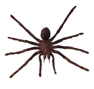 Drawn spider northern Com to and images Identifying