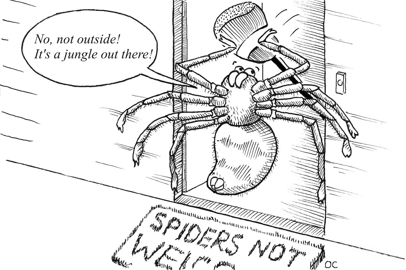 Drawn spider not From a spider Owen a