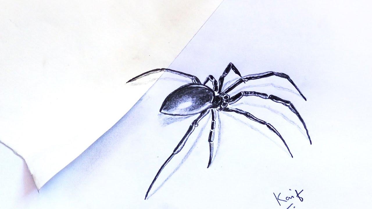 Drawn pencil spider Spider Black Black 3D Pencil