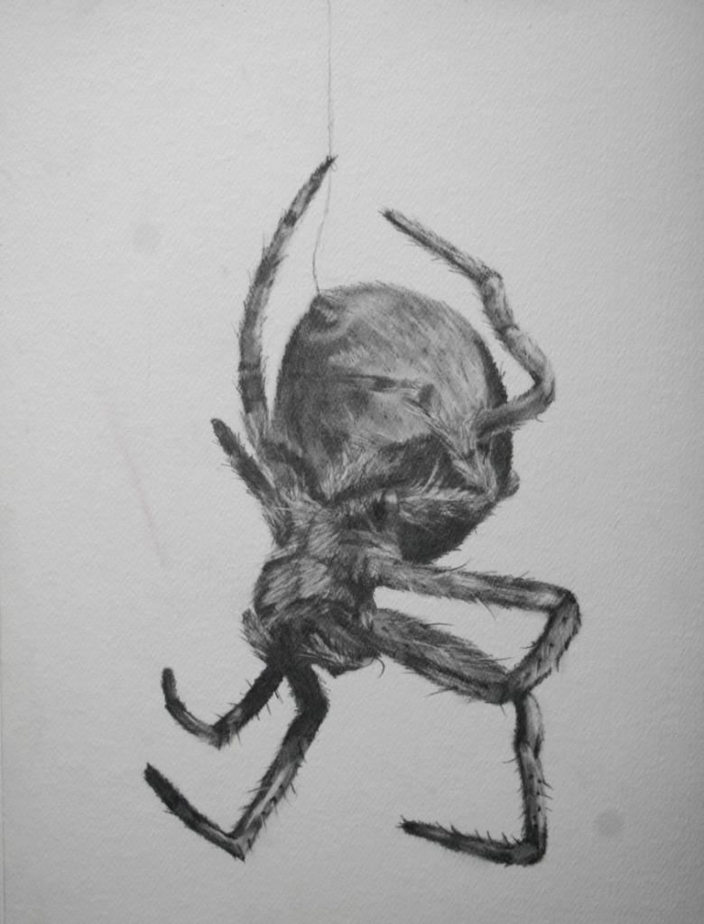 Drawn pencil spider Drawings Pencil Pencil Sketch Spider