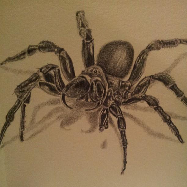 Drawn spider pencil Web Drawing Widow Spider 38726231