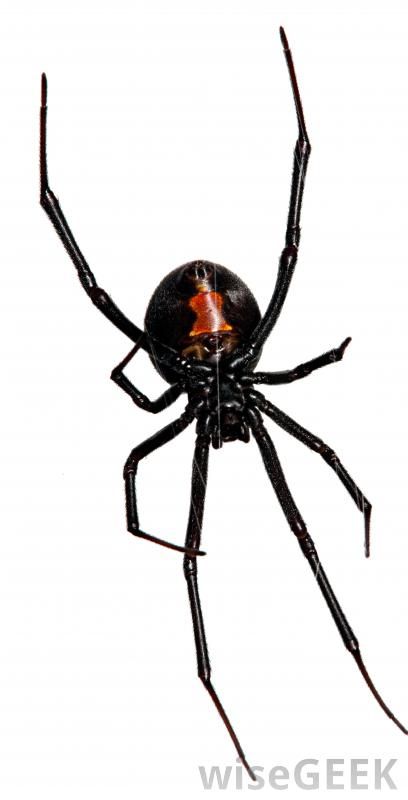Drawn spider poisonous Widow's poison pictures) the Deadliest