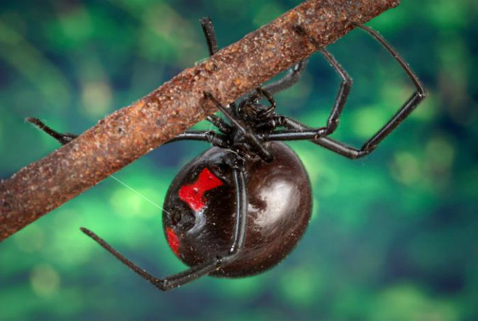 Drawn spider poisonous Spider 7 Videos) the Poisonous