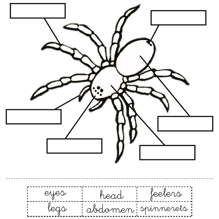 Drawn spider printable Parts learners a for ideas
