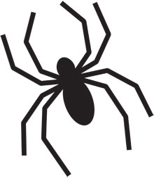 Drawn spider pumpkin carving Here's Novelty: carving a Novelty:
