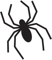 Drawn spider pumpkin carving #6