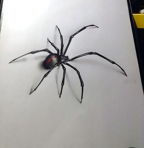 Drawn spider real Spider tattoo ideas Tattoo 3D