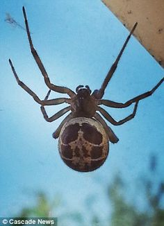 Drawn spider real Spiders flesh bulbous are legs