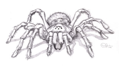 Drawn spider realistic Drawing Realistic Pencil Spider Images