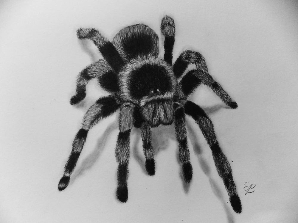 Drawn spider realistic By YouTube A Step Illusion