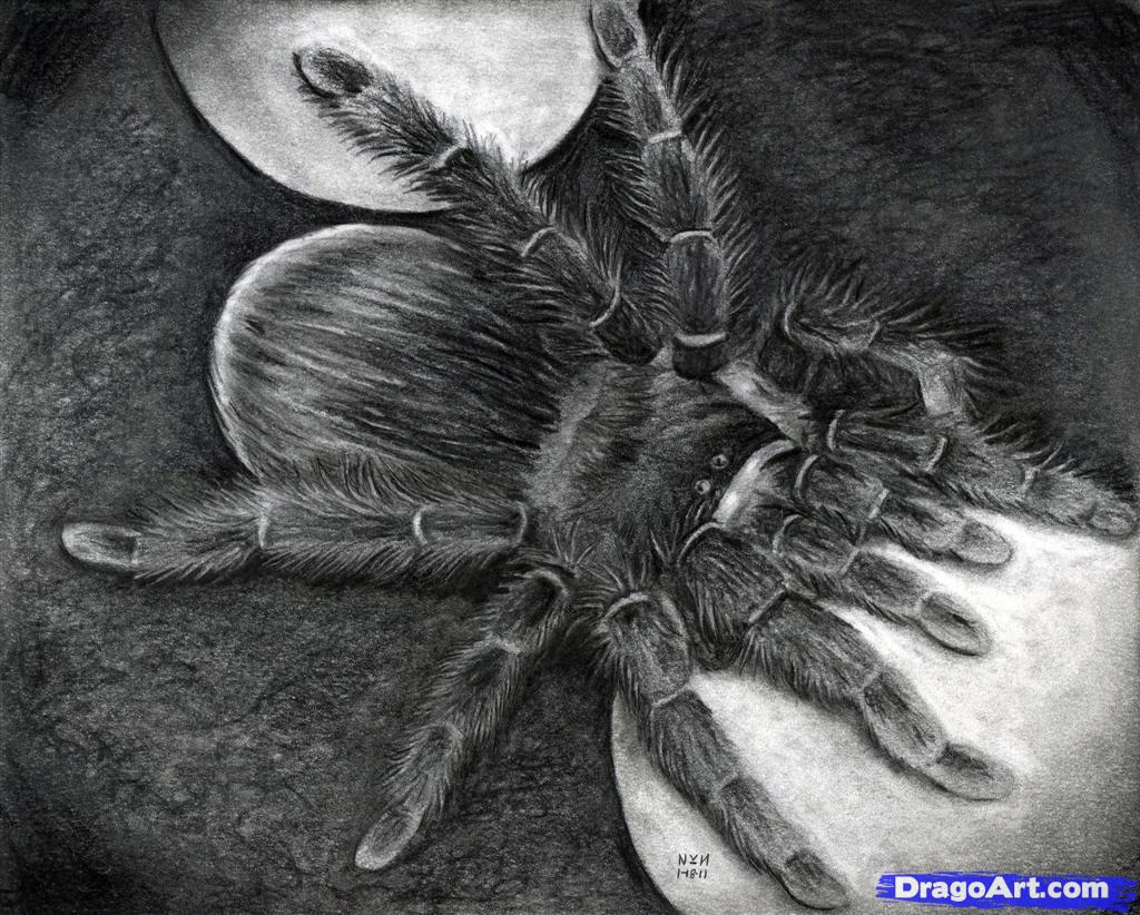 Drawn spider realistic Step How  Spider Spider