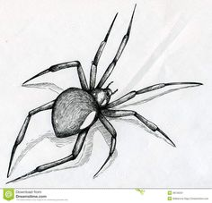 Drawn spider realistic  38726231 Pinterest Amazing Stock