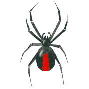Drawn spider red back spider Piece Contrast spider Spreadshirt drawing