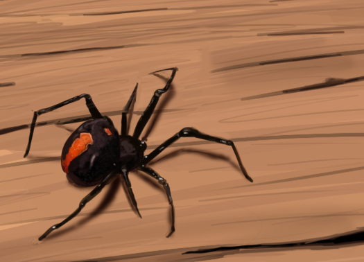 Drawn spider red back spider By Redback Spider DrawingCode by