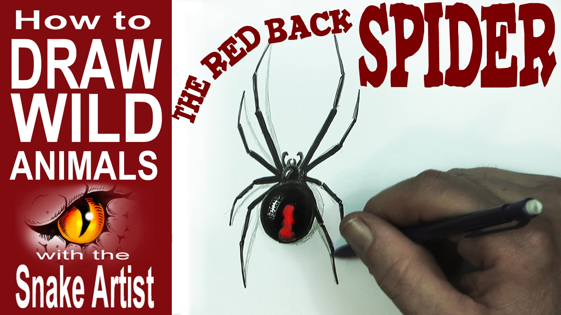 Drawn spider red back spider How Spoken the to Red