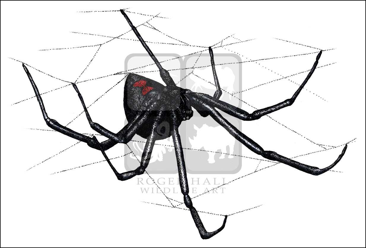 Drawn spider web acid Spiders: at Line InkArt Illustrations