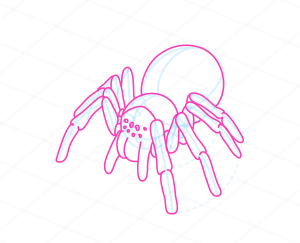 Drawn spider side view And Anatomy a to Movement