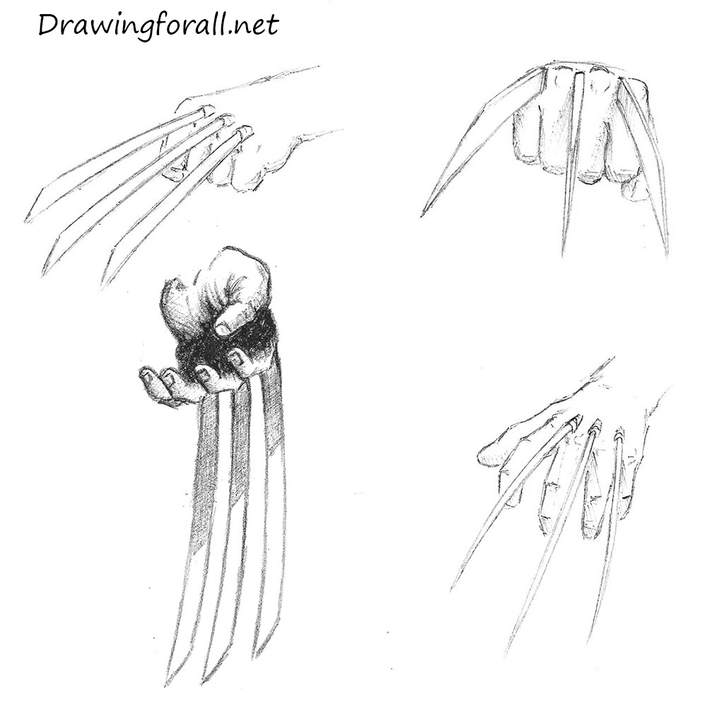Drawn spider side view To DrawingForAll How Wolverine Draw