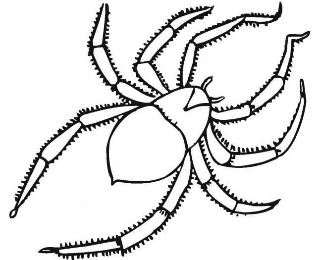 Drawn spider simple  & Crafts Spider 55+