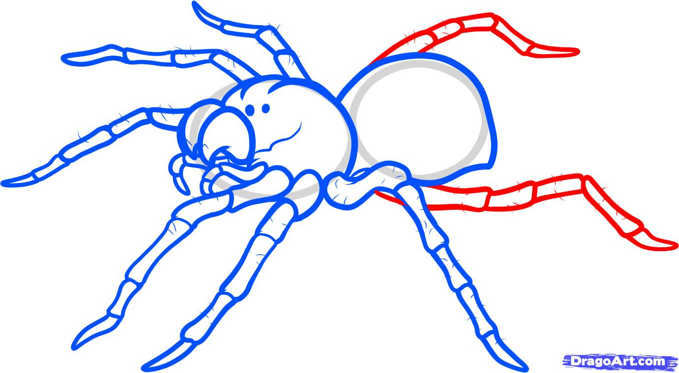 Drawn spider simple Draw Spider Tattoo step spider