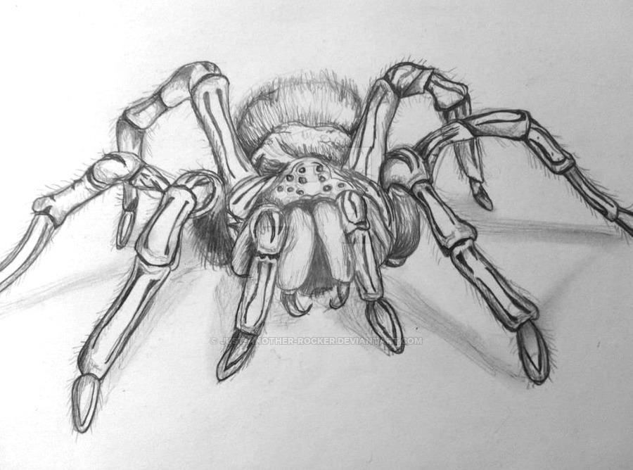 Drawn spider sketched 5 Rocker Spider spiderdrawing DeviantArt