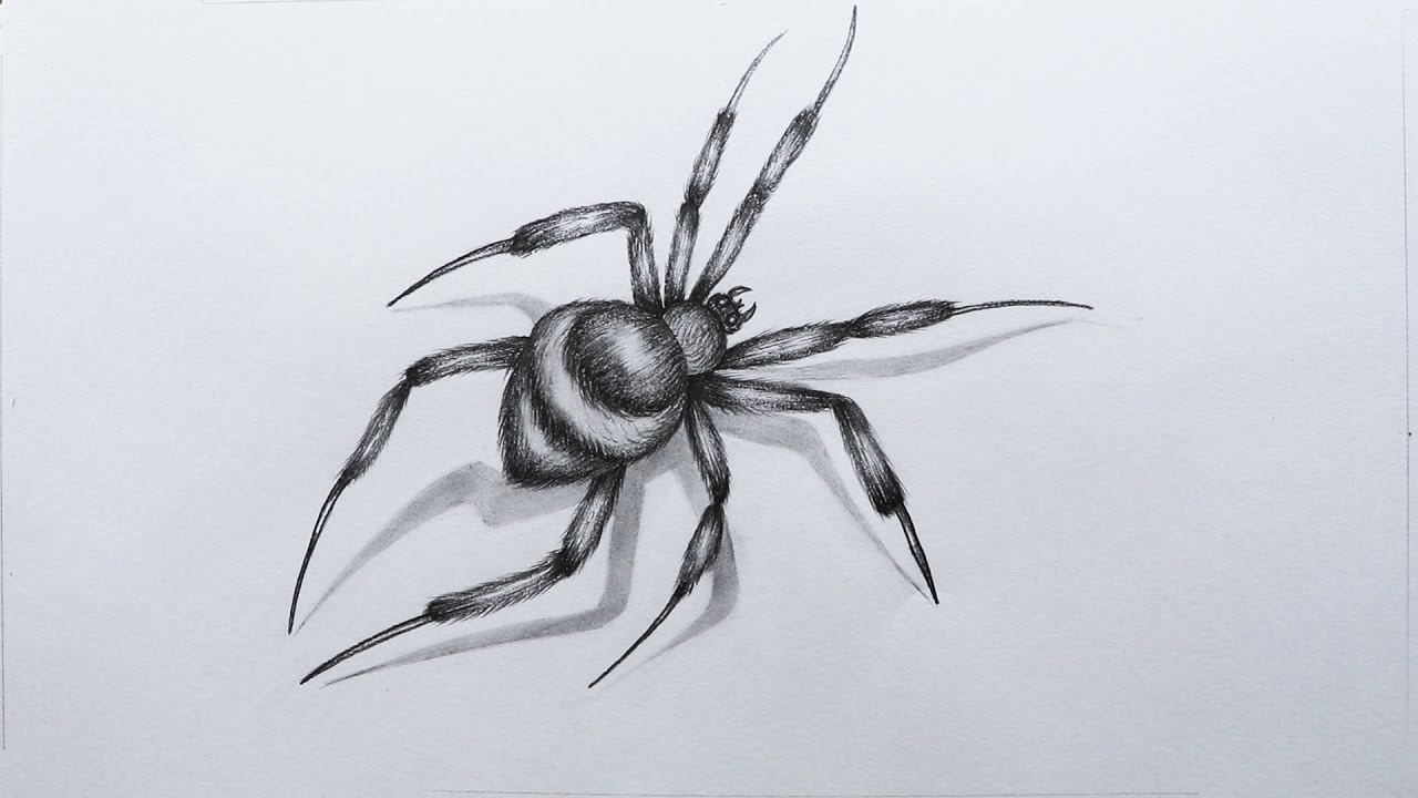 Drawn spider sketched To a a Spider YouTube