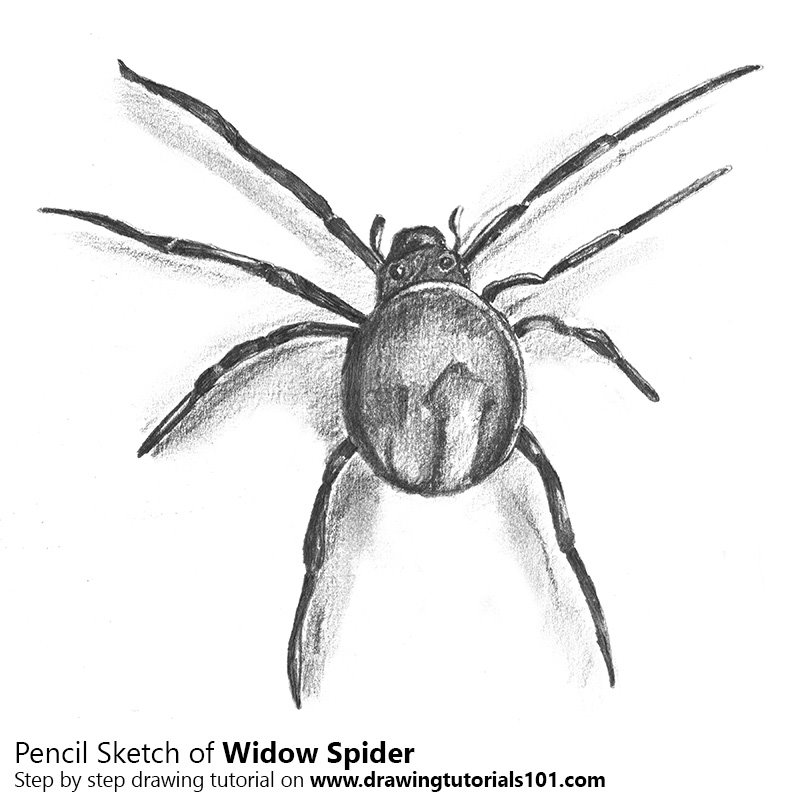 Drawn spider sketched Sketch using Pencil Sketch Drawing