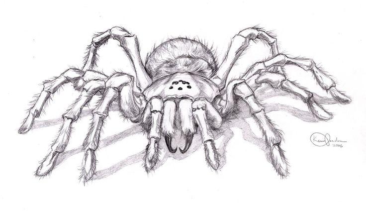 Drawn spider sketched Image spider Gallery sketch