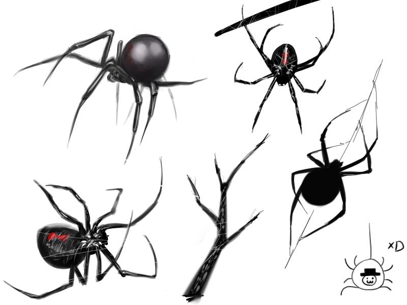 Drawn spider sketched Sketches on bachanozar DeviantArt bachanozar