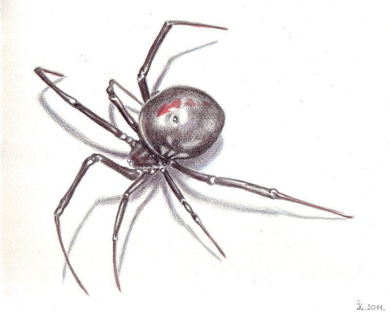 Drawn spider sketched Black  The rysunki DrawingSpider