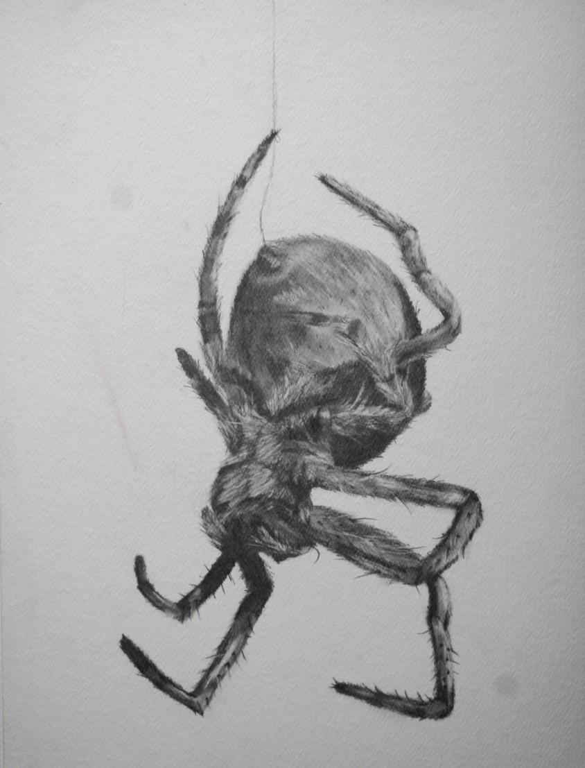 Drawn spider sketched Sketch Sketch (toekneestuck) Tony Spider