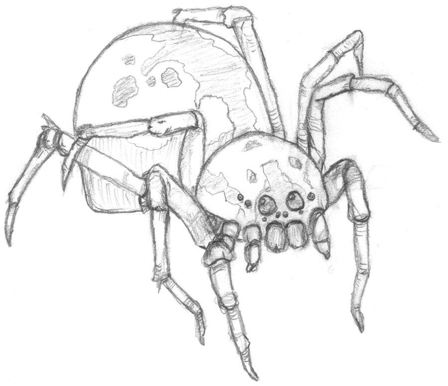 Drawn spider sketched Sketch on JaxWerx DeviantArt JaxWerx