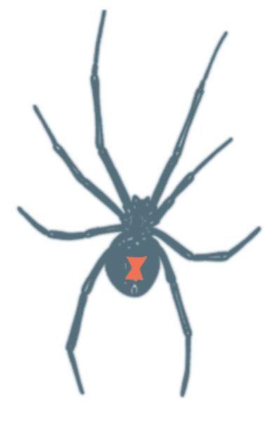 Drawn spider small black Black Widow Pinterest 20 images