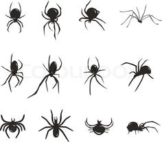 Drawn spider small black Vector day of Stock 38726231