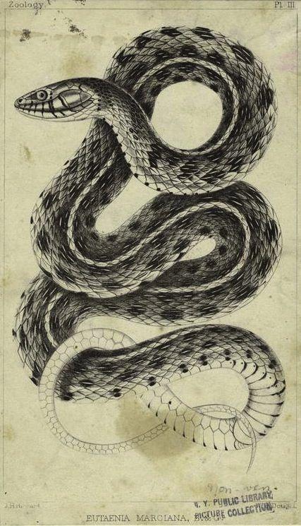 Drawn spider snake Snake ideas  best 25+