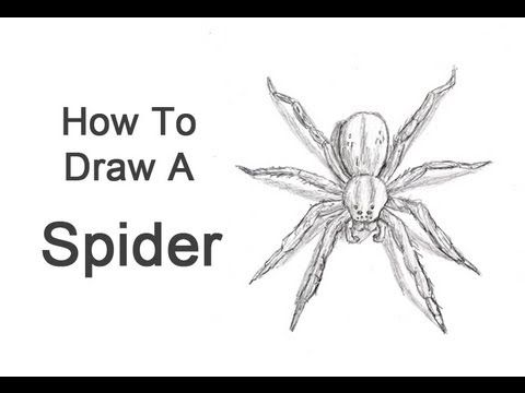 Drawn spider southern #8