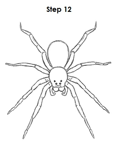 Drawn spider spider black and white #13