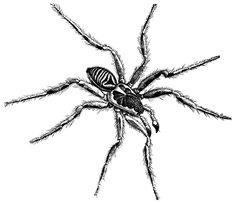 Drawn spider spider black and white #9