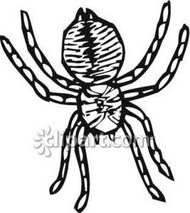 Drawn spider spider black and white #12