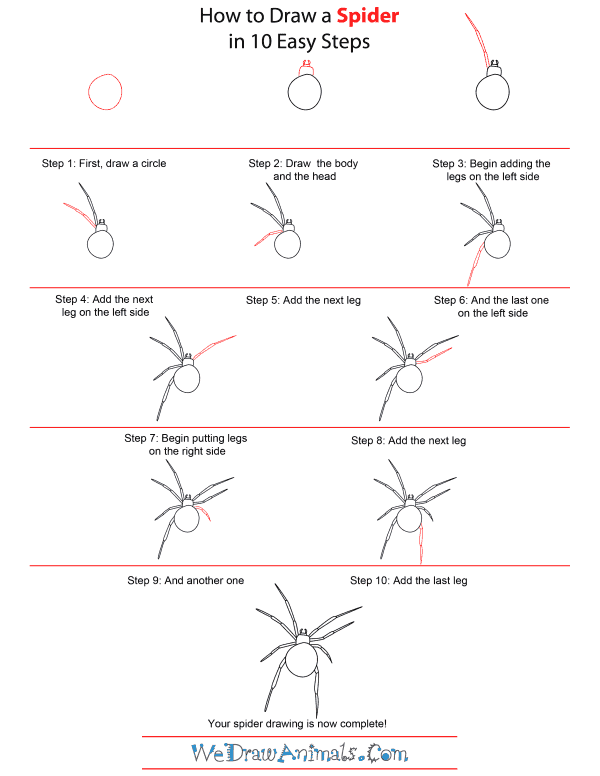 Drawn spider step by step Step Draw Spider Tutorial To