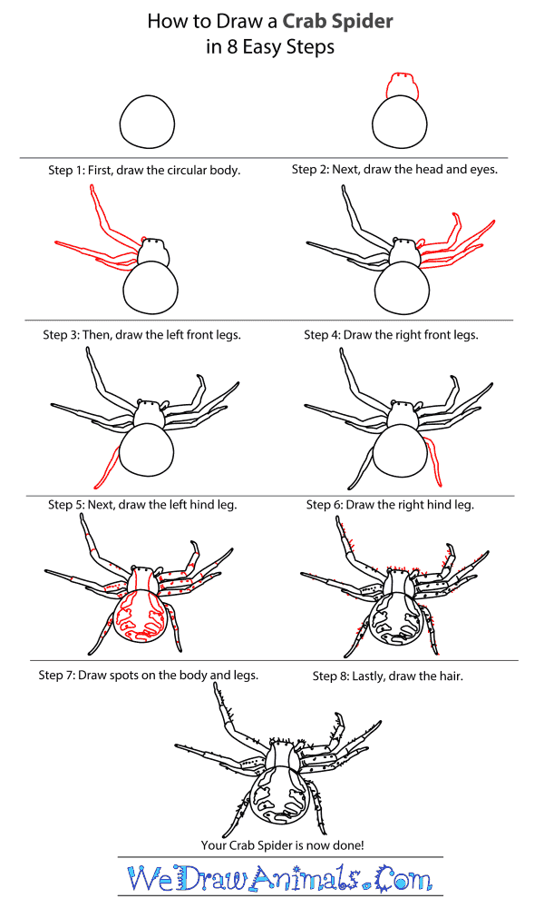 Drawn spider step by step #3