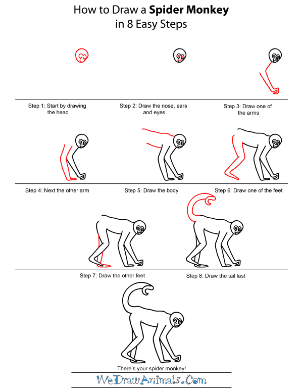 Drawn spider step by step #7