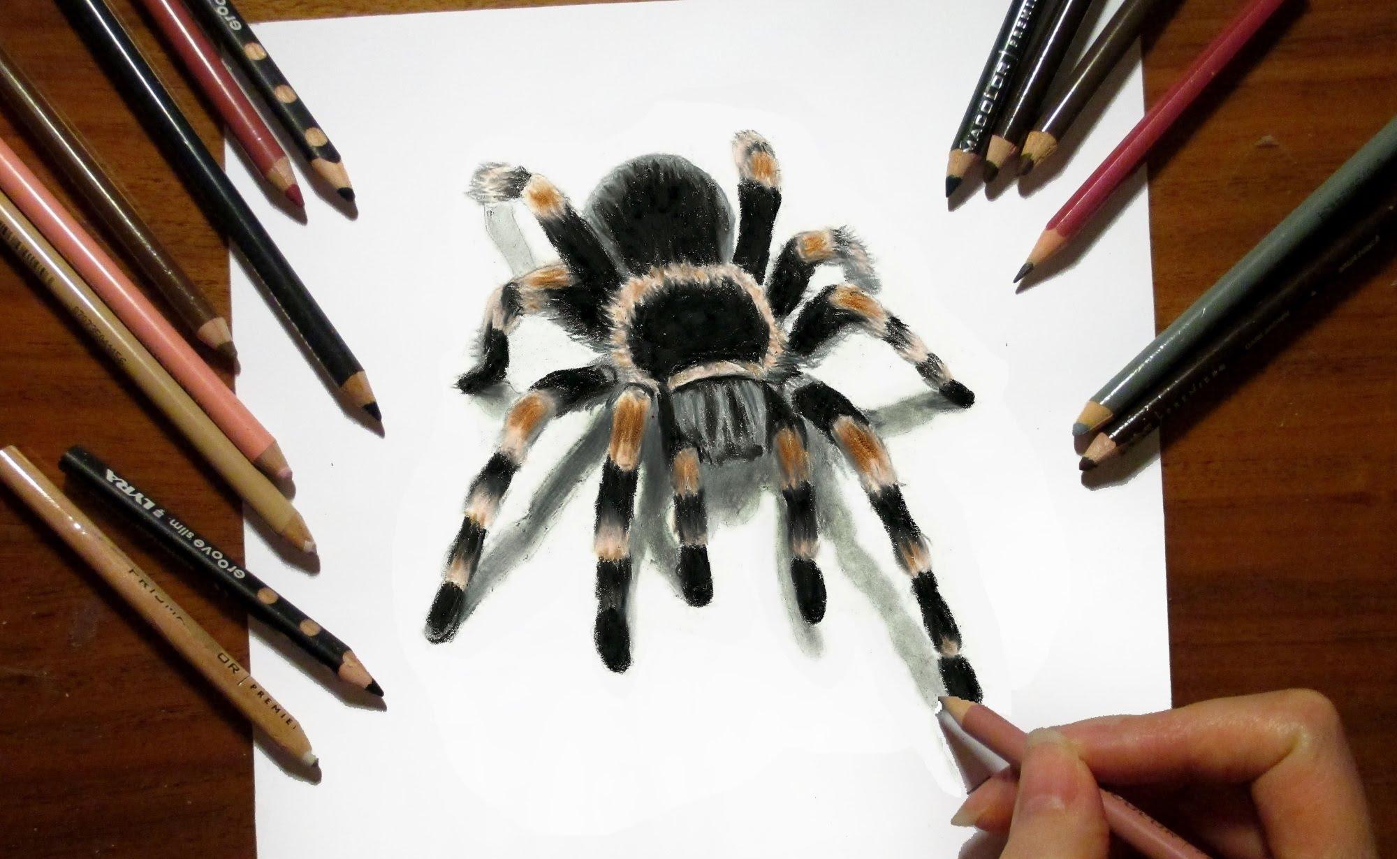 Drawn spider tarantula Speed Susak Tarantula Colored 3D