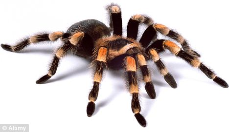 Drawn spider tarantula Bit a Usually more The