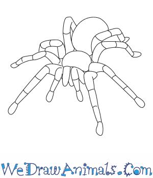 Drawn spider tarantula To Tarantula  a Draw